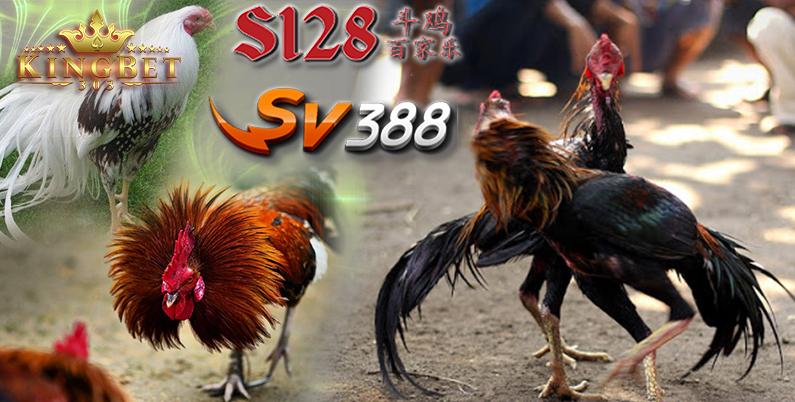 Sabung Ayam Terbaik