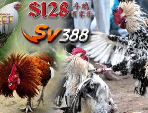 Sabung Ayam Live